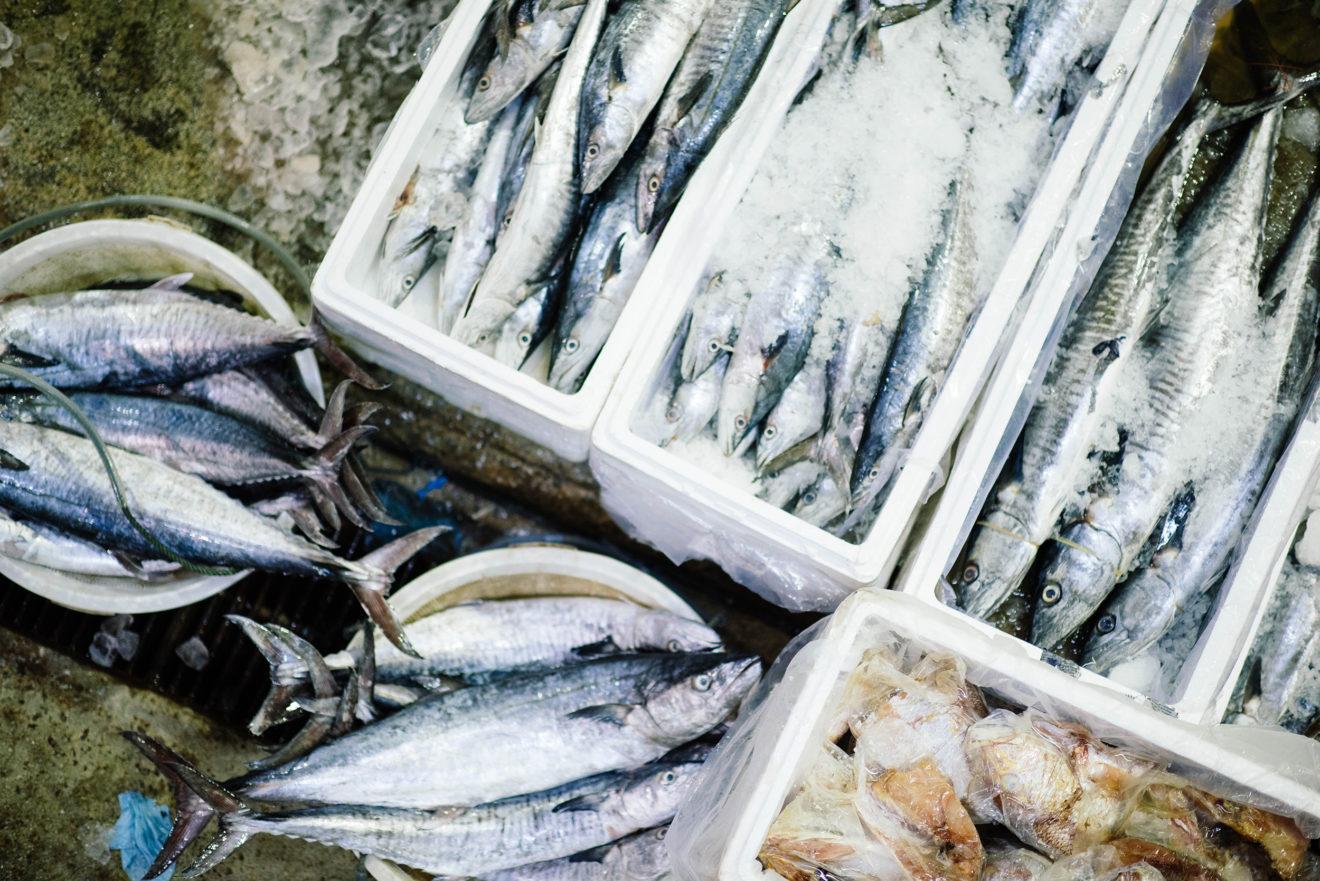 Pêche en Mer du nord: le Parlement européen s'oppose à la surpêche