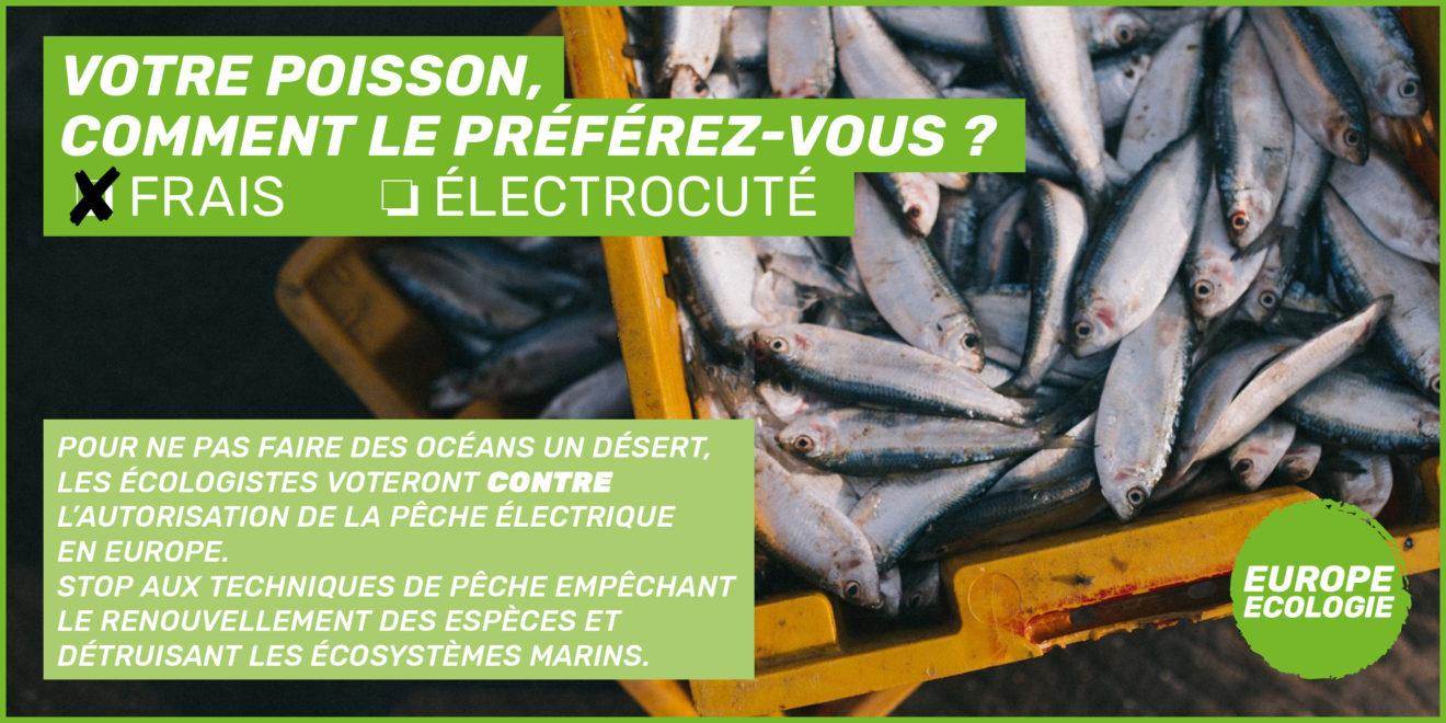 Pêche électrique : quand la Commission européenne privilégie les lobbys aux scientifiques !