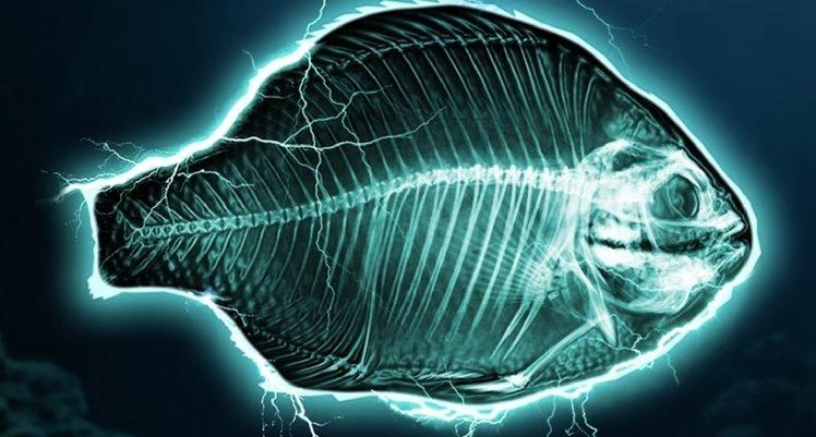 Le Parlement européen vote l'interdiction de la pêche électrique