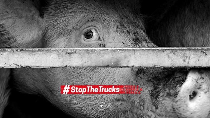 Le profit des groupes agro-alimentaires plutôt que la condition animale