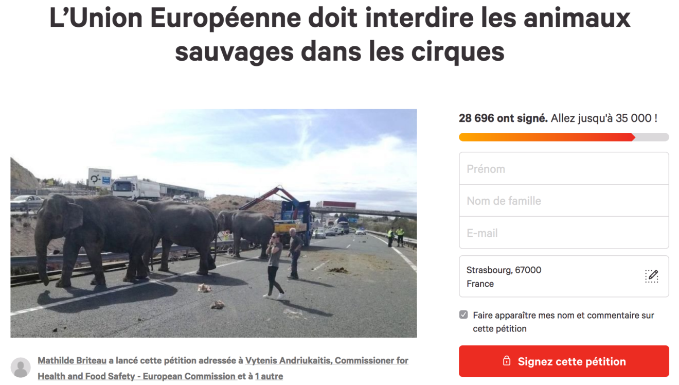 L'Union Européenne doit interdire les animaux sauvages dans les cirques