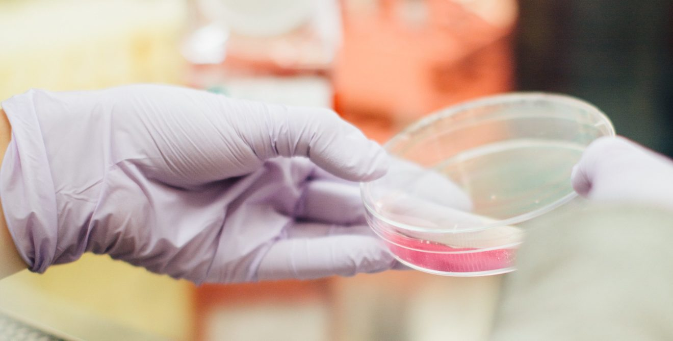 Industries cosmétiques : le Parlement européen préconise une interdiction mondiale des tests sur les animaux