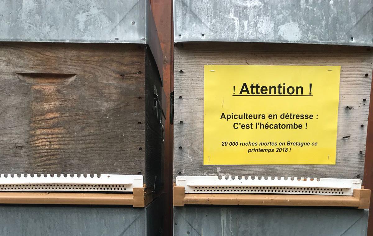 Il faut agir maintenant pour sauver l'apiculture