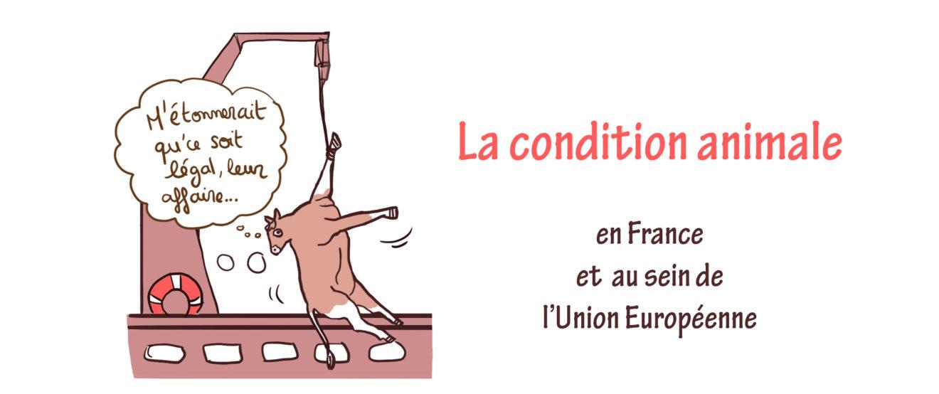 La condition animale en France et au sein de l'Union européenne