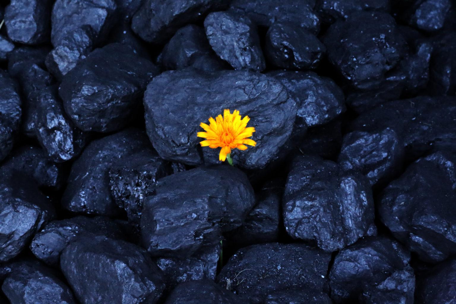 flower-coal-yellow-fuel-carbon-dioxide-organic-1418551-pxhere.com