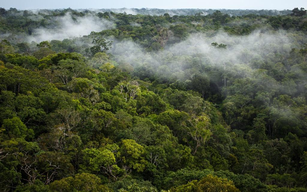 foretamazonienne-©SebMarPhotography-Flickr-petit
