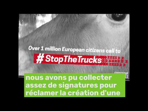 L'indécent transport des animaux vivants : pour une commission d'enquête européenne